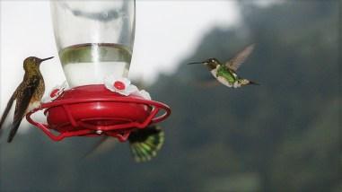 colibries-20