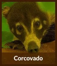 Thumbnails_corcovado
