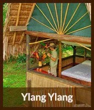 Thumbnails_ylang_ylang