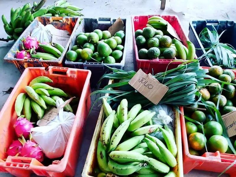 Frutas Frescas de Temporada Happy Fruit