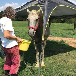 Smokey standing upright and feeding following his fall last Tuesday. [SUBMITTED PHOTOS]
