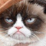 Bekende Grumpy Cat sterf