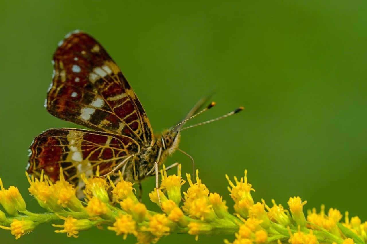tschechische Schmetterlinge sind auch sehr schön