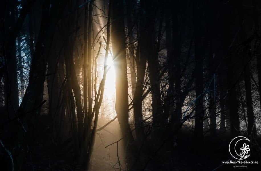 Über vier Stunden war ich an diesem Tag auf dem Moselsteig von Reil nach Traben Trabach unterwegs, es war dichter Nebel, arschkalt und es gab rein gar nichts zu fotografieren. Ich war schon kurz davor meine Kamera wegzuwerfen und doch das Häkeln zu lernen, als plötzlich der erste kleine Sonnenstrahl durch den Nebel lugte. Auf einmal war die Welt in ein gigantisch warmes Licht gehüllt, die Sonne brach immer wieder durch und der Wald erstrahlte in unheimlichen Glanz. Innerhalb 15 Minuten hatte ich locker 500 Bilder geschossen und schwups alles war wieder vorbei und der Nebel hatte gewonnen! Aber jetzt hütete ich meine Kamera wieder wie ein Schatz :-)