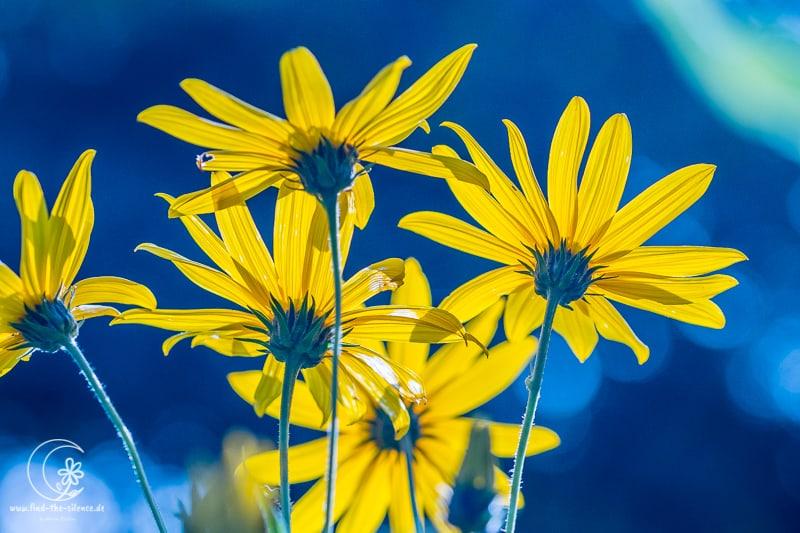 Blumen aus dem botanischen Garten Visby (Schweden)