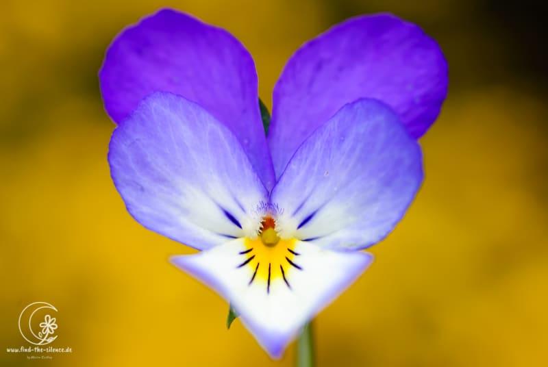 Ein Herz für Blüten