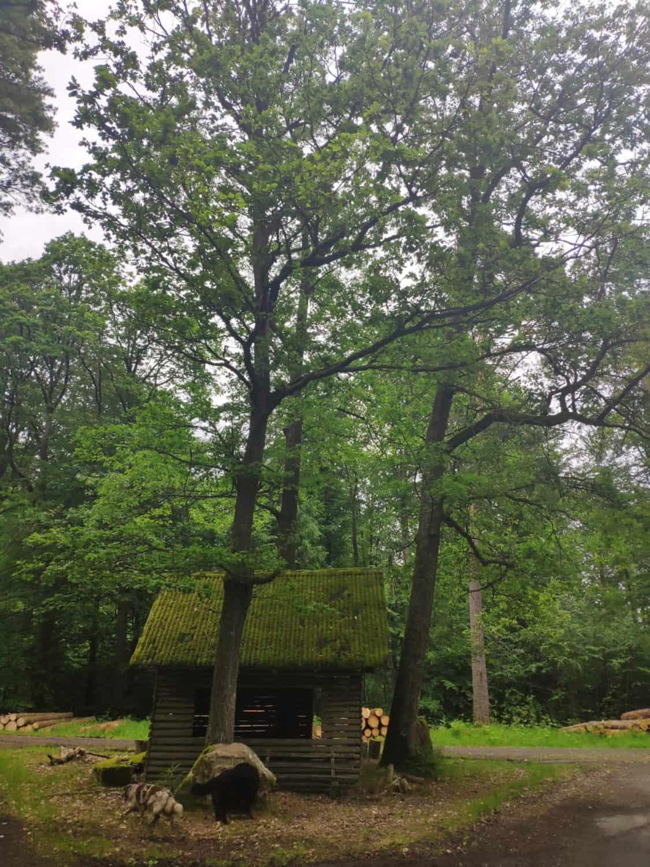 Räuber-Hütte