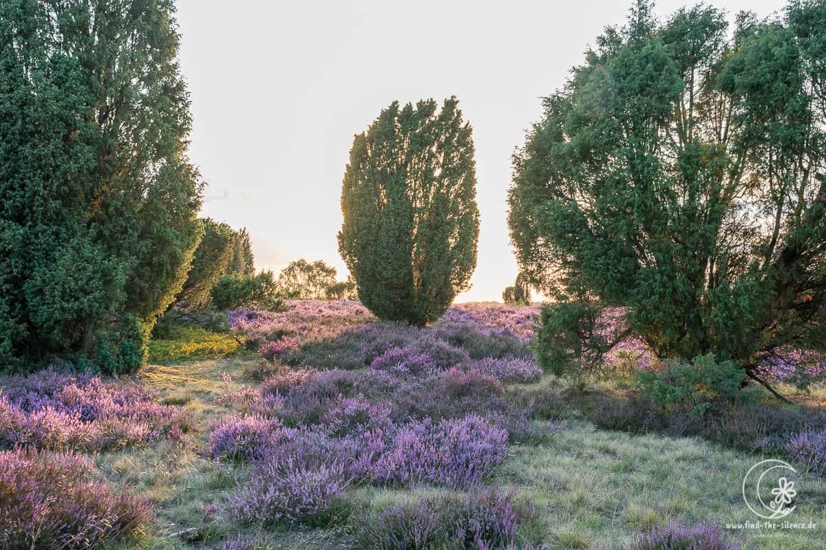Lüneburger Heide - Geocaching Wanderung durchs Naturschutzgebiet während der Heideblüte