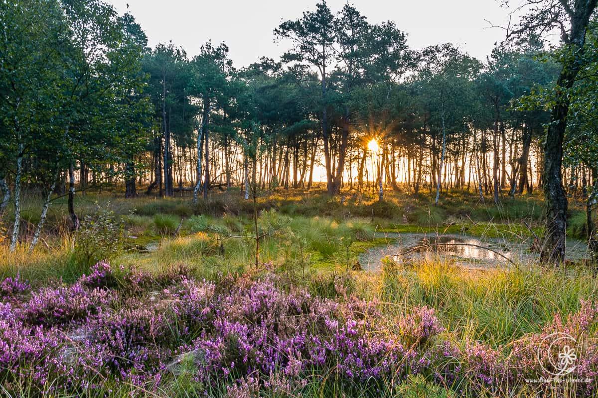 Sonnenaufgang im Pietzmoor bei Schneverdingen in der Lüneburger Heide