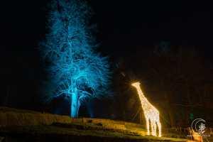 Giraffe von fern