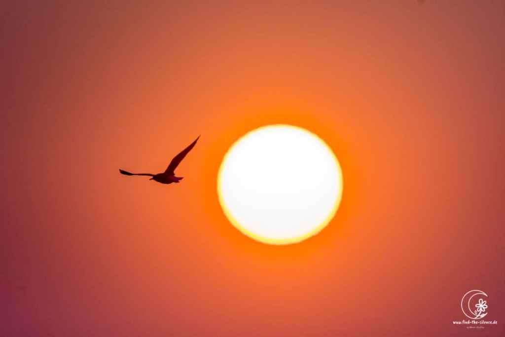 Möwe vor der Nordsee-Sonne