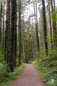 Wunderbare Waldstimmung zu Beginn