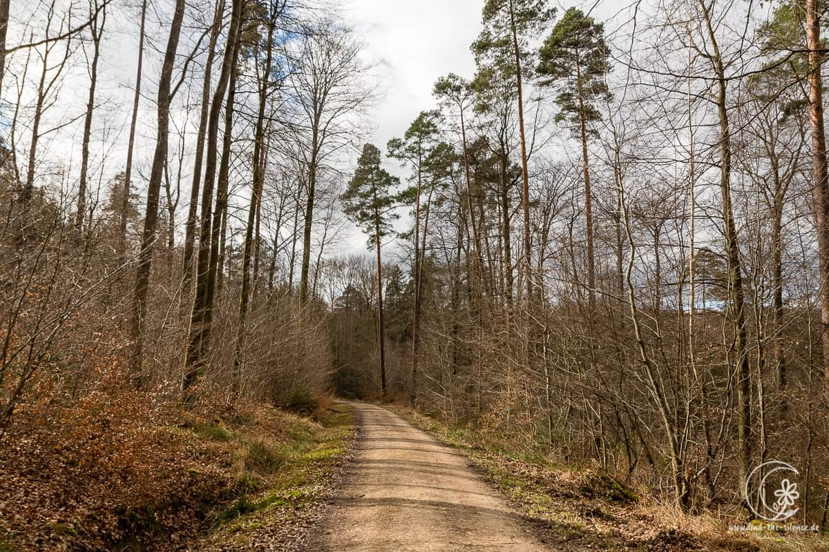 Sonnen-Frühlingswald