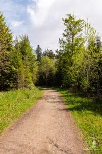 Forstwege im zweiten Teil der Tour