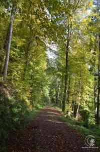 typische Wege durch den Wald