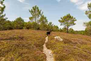 GR34-Wanderweg über die Heide