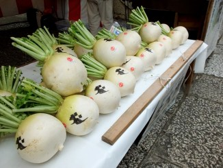 the white radishes to bring home