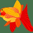 fish,animal