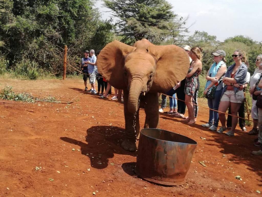 elephant orphanage nairobi cost