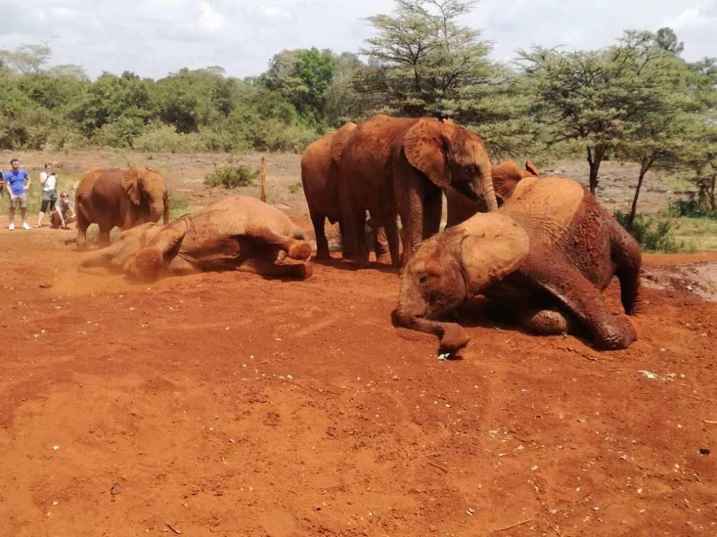 Nairobi elephant orphanage price