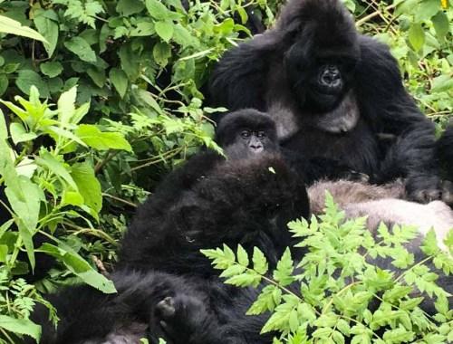 things to do in Rwanda