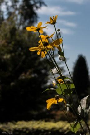 Emmetts Garden-4