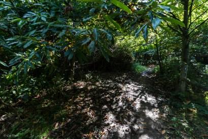 Darnley Trail-6