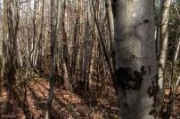 Shorne Woods-10