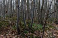 Shorne Woods-12