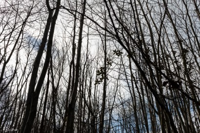 Shorne Woods-4