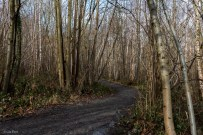 Shorne Woods-5