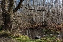 Shorne Woods-7