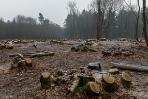 kings-wood-winter-1