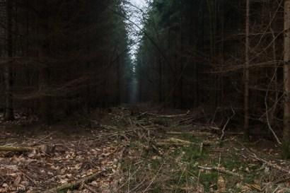kings-wood-winter-15