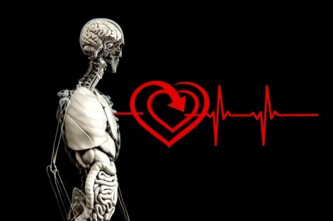heart, bones, collagen health