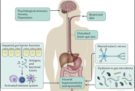 leaky gut, collagen health