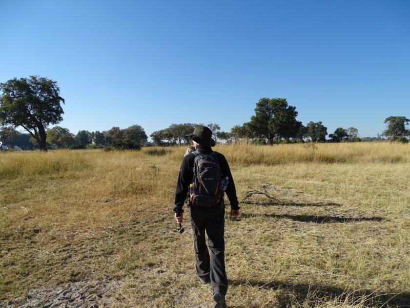 Okavango Delta auf der Suche nach Elefanten