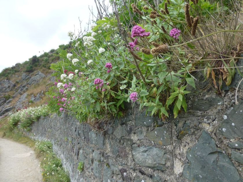 Wandern in Irland - Bray Greystones Cliffwalk