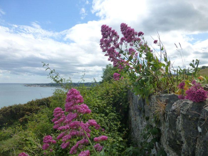 Bray Greystones Cliff Walk