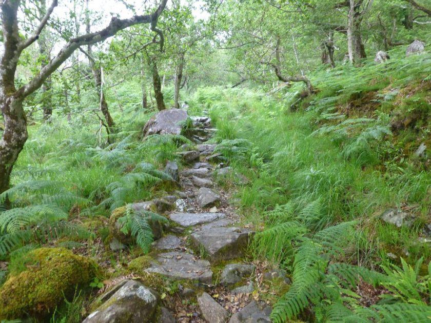 Killarney Wandern