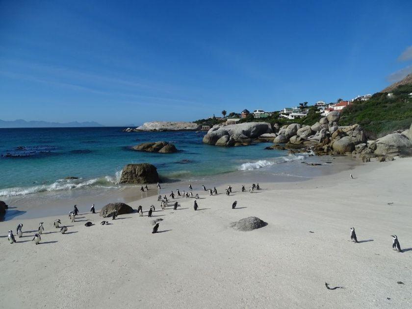 Pinguine Boulders Bay Simonstown Südafrika