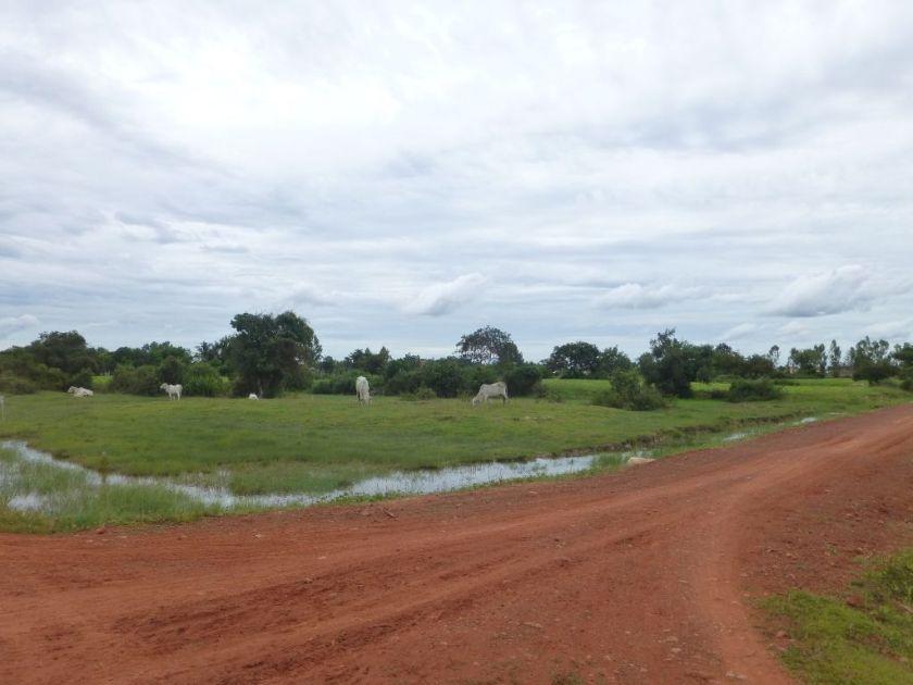 Siem Reap Kambodscha Landschaft