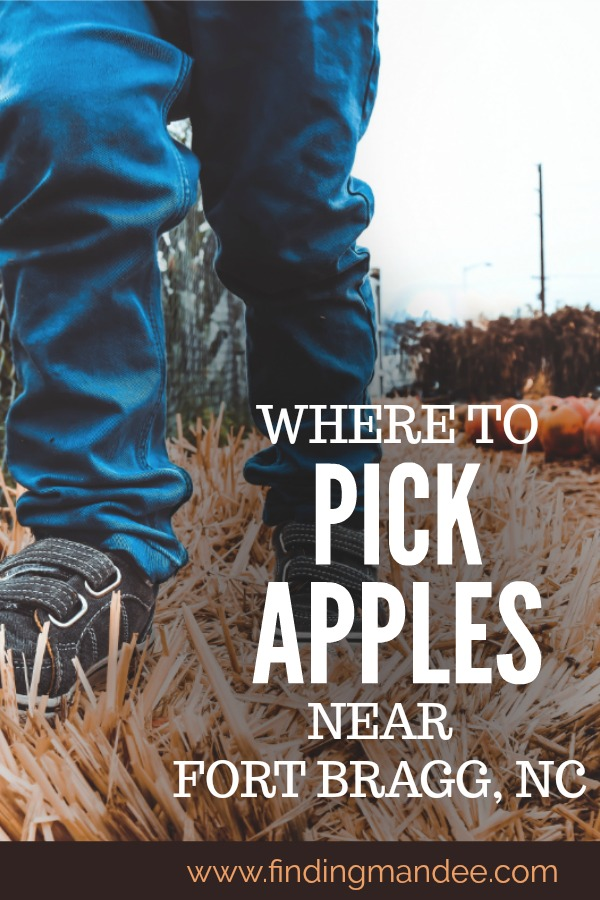Pick-Your-Own-Apple-Orchards near Fort Bragg, NC | Finding Mandee