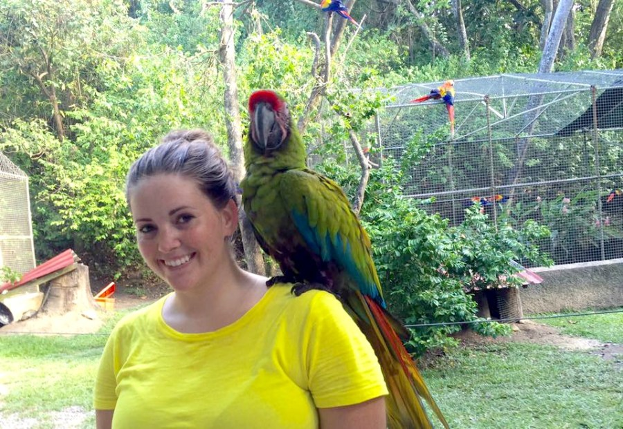 things to do in Roatan see the birds in Gumbalimba Park