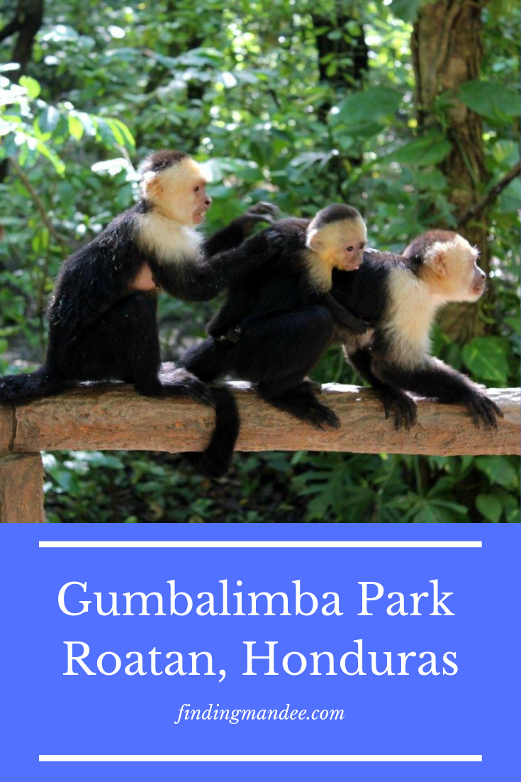 The Most Instagrammable Spot in Roatan: Gumbalimba Park