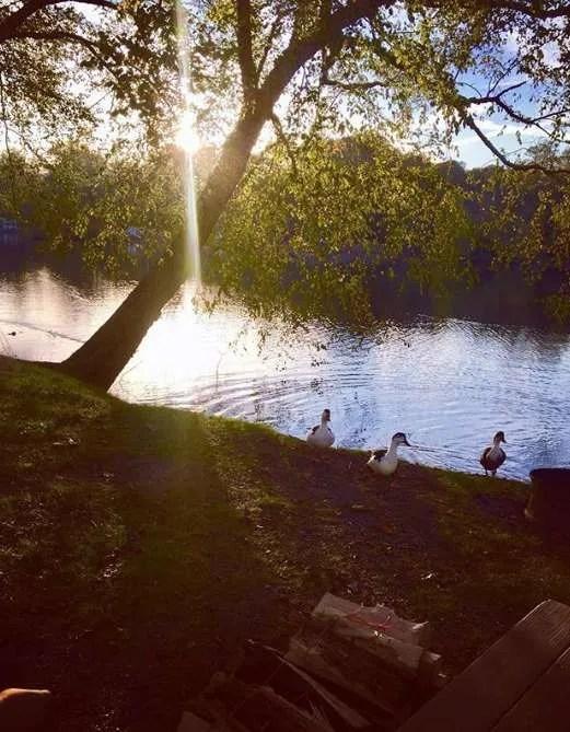 We loved feeding the ducks on the lake at Asheville KOA East.
