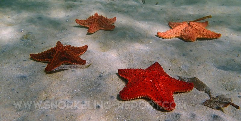 Things to do in Roatan: Starfish Alley
