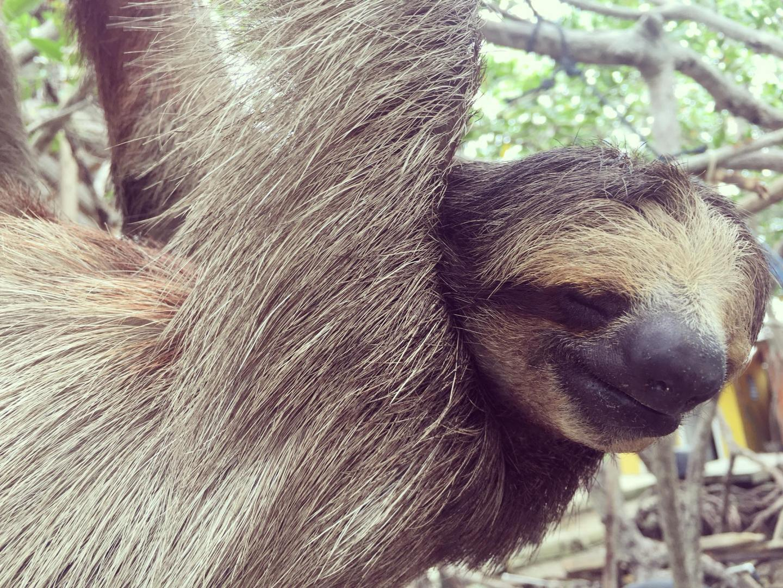 Things I Wish I Had Done in Roatan: Daniel Johnson's Monkey & Sloth Hangout