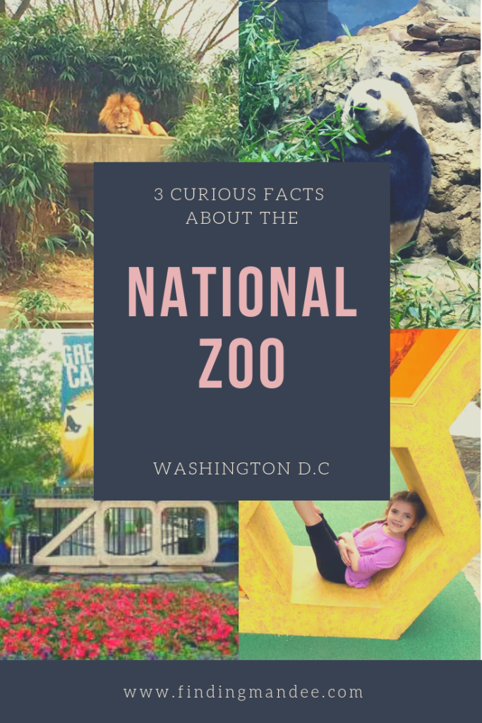 3 Curious Facts About the National Zoo in Washington D.C. | Finding Mandee