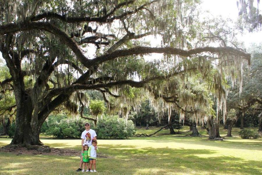 The century-old oak trees at Jungle Gardens on Avery Island.
